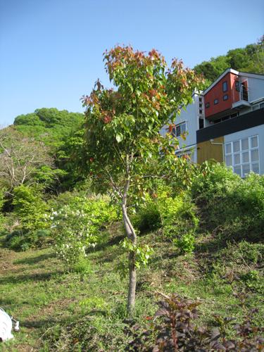 千木良の庭